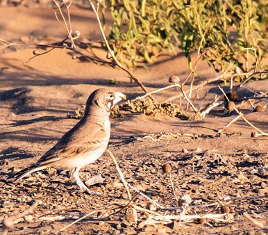 Viaje ornitologico a Marruecos